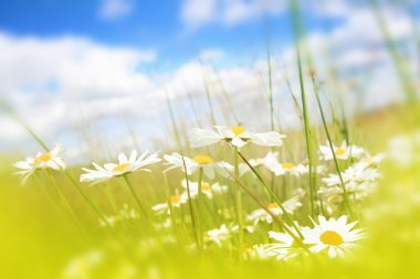 Beautifufl spring meadow background with blue sky stock vector