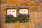 Winzige schottische Fenster mit Blumen