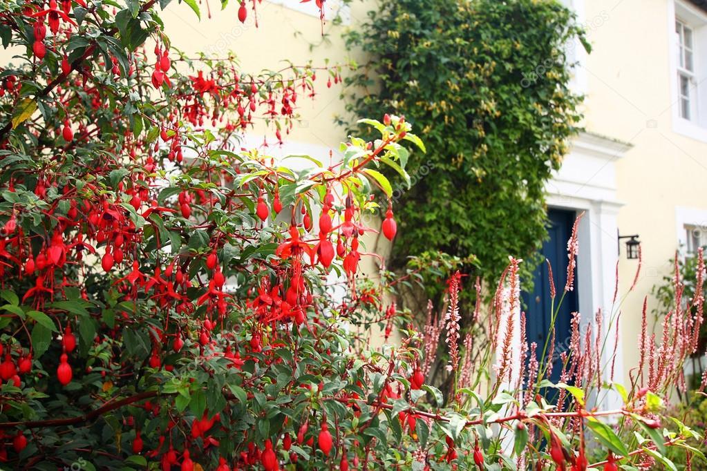 Fuchsia Blumen Im Vorgarten Stockfoto C Julietart 32352805
