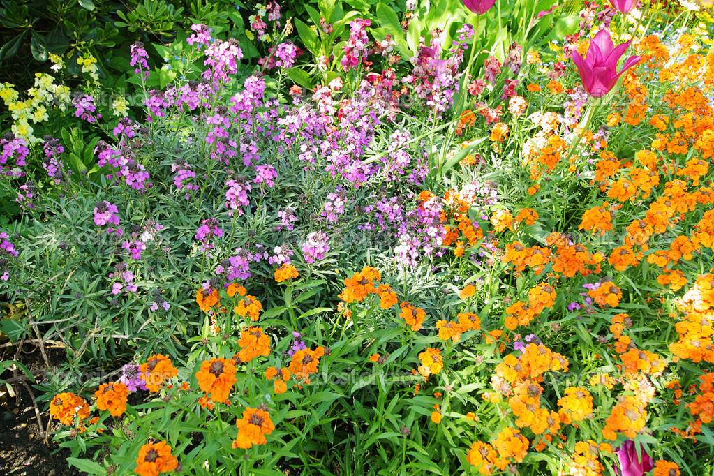 Spring flowers in st james park london stock photo julietart spring flowers in st james park london stock photo mightylinksfo