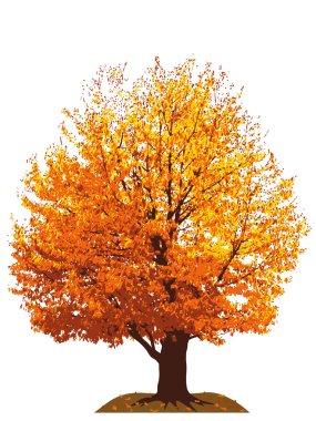 Autumn cherry tree illustration