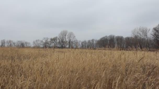 suché trávy na louce. podzimní čas. HD