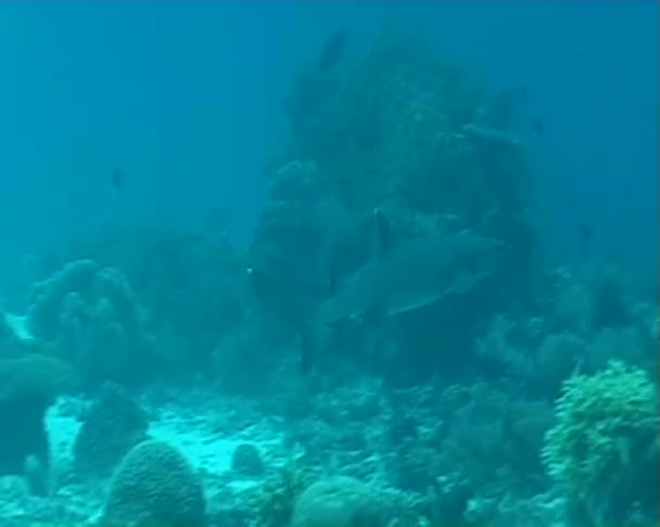 Cápa búvárkodás, víz alatti
