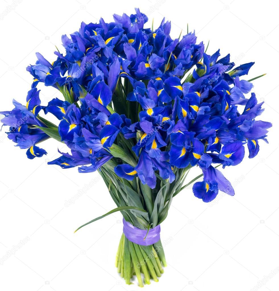 Bevorzugt d'IRIS bleus — Photo #37578297 HP75