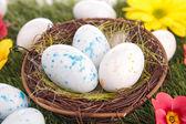 Fotografie velikonoční vejce