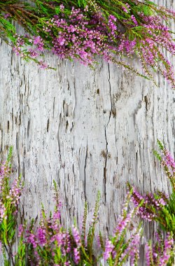 Heather on the old wood