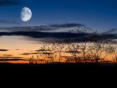 Fotografie noční pozadí
