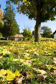 barevné listí v podzimním parku