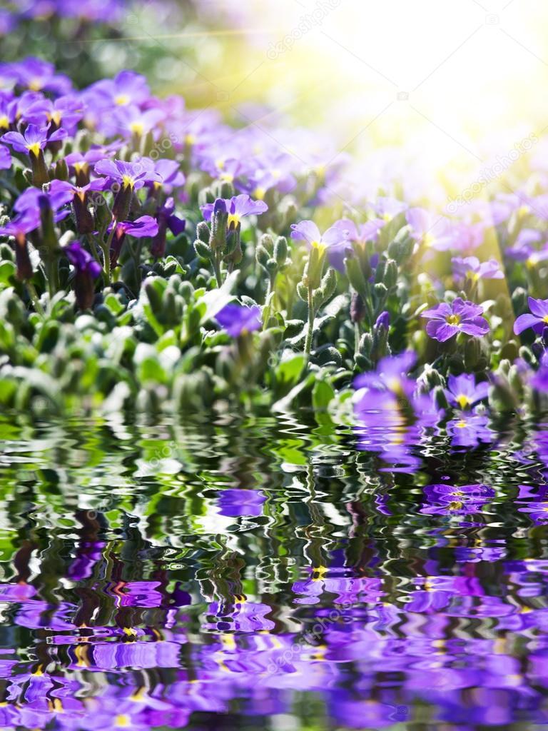 Blue flowers on water
