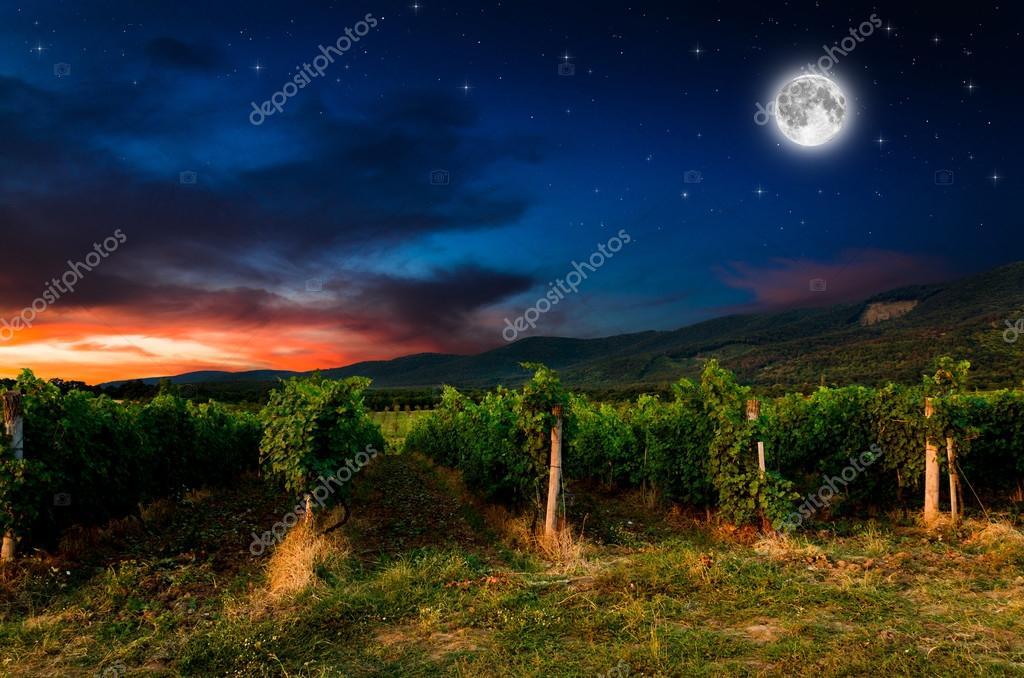 Grape field