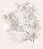Fotografie Orchid branch