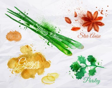 Spices herbs set drawn watercolor blots and stains with a spray star anise, parsley, spring onion, ginger root clip art vector