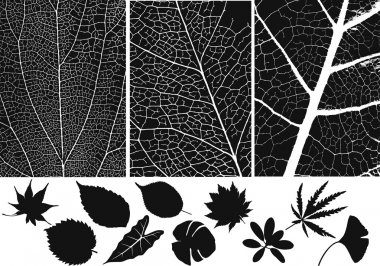 Set of leaf vector and texture