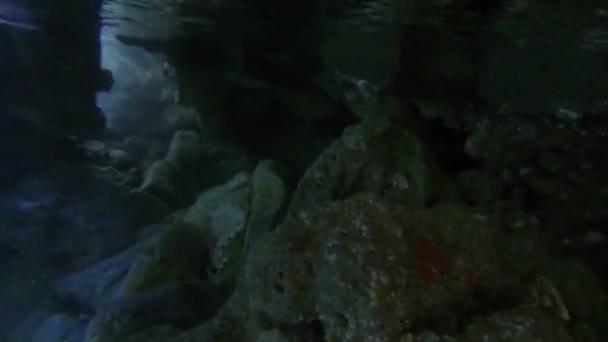 Timelapse underwater