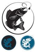 Fotografie die Abbildung zeigt den Fisch Zander
