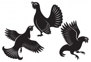 The figure shows the bird grouse