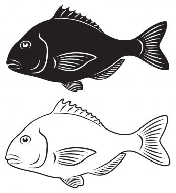 The figure shows seabass