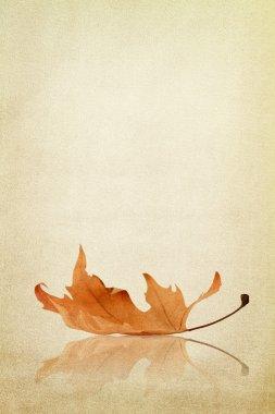 Autumn maple leaf on fabric texture