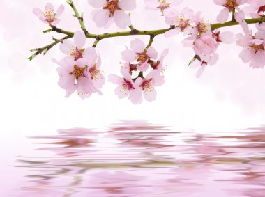 Pink flowers blooming reflected in water