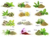 kolekce čerstvých a suchých aromatických bylin