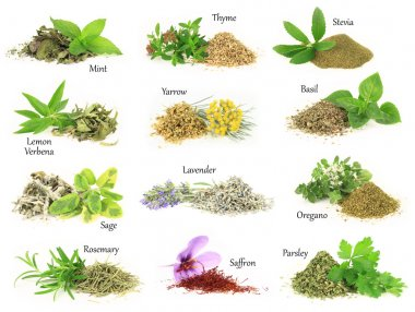 Collection of fresh and dry aromatic herbs stock vector