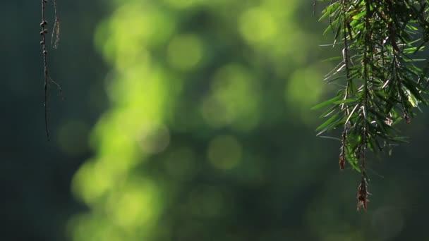 Zelená bokeh 1