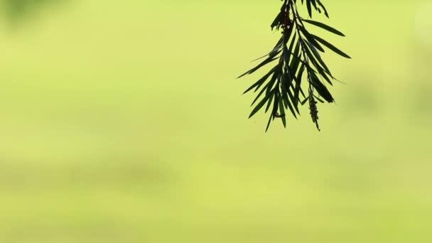 Zelená bokeh 2
