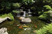 Fotografie garden