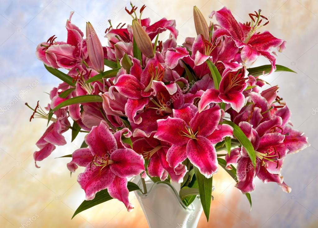 Pink lilies on a colored background