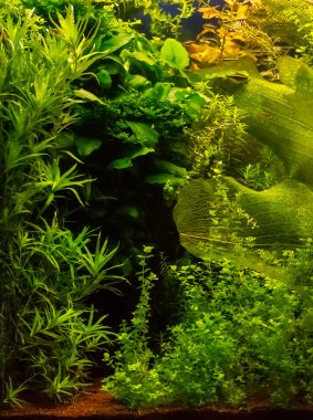 Seaweeds and plants in water