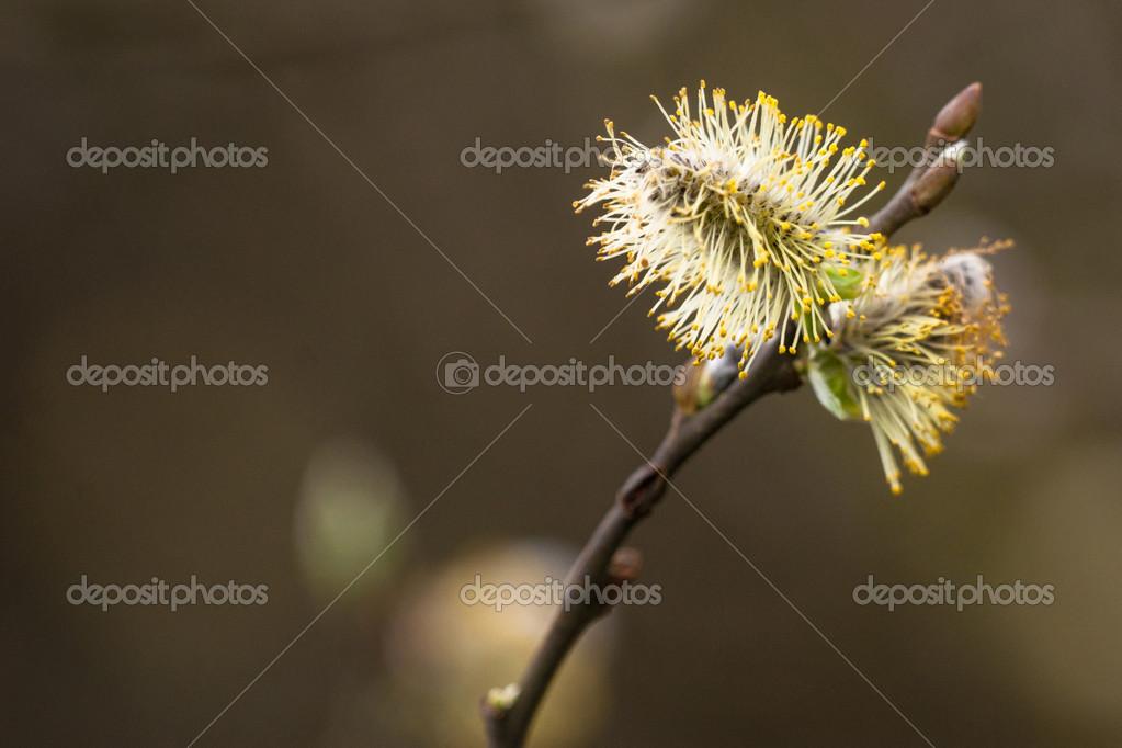 semeno v kunde free foto cz
