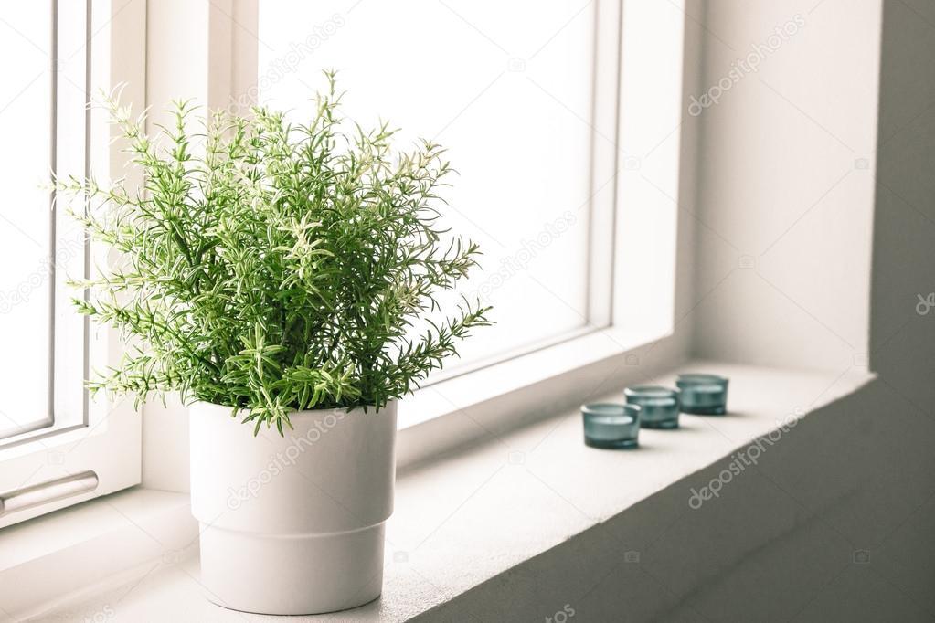 binnen plant in een badkamer venster — Stockfoto © Sportactive #47985533
