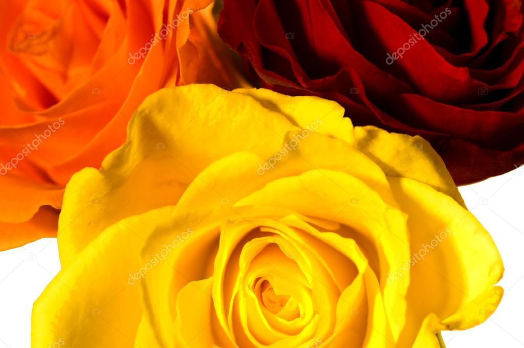 depositphotos_18942605-stock-photo-roses-in-three-colors.jpg?profile=RESIZE_584x