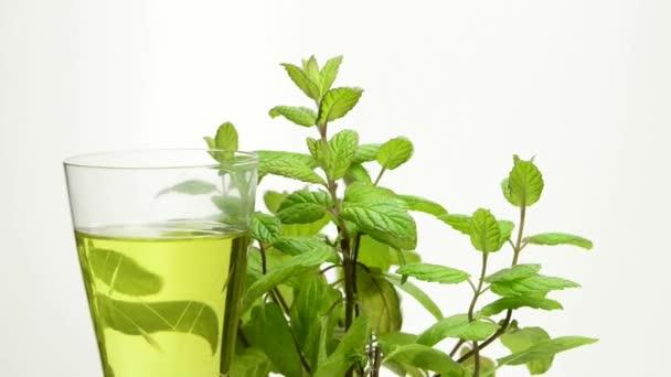 Peppermint rostlin a mátový čaj