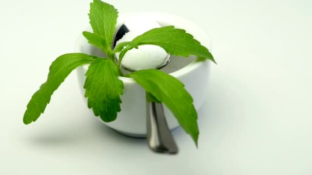 Stevia rebaudiana, the herbal support for sugar