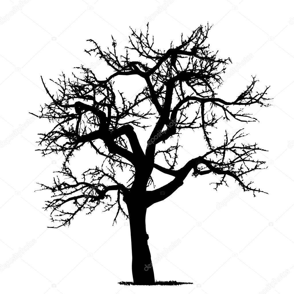 Oak Tree Drawing Dibujo Del 225 Rbol Vector Detallado Vectorial Vector De