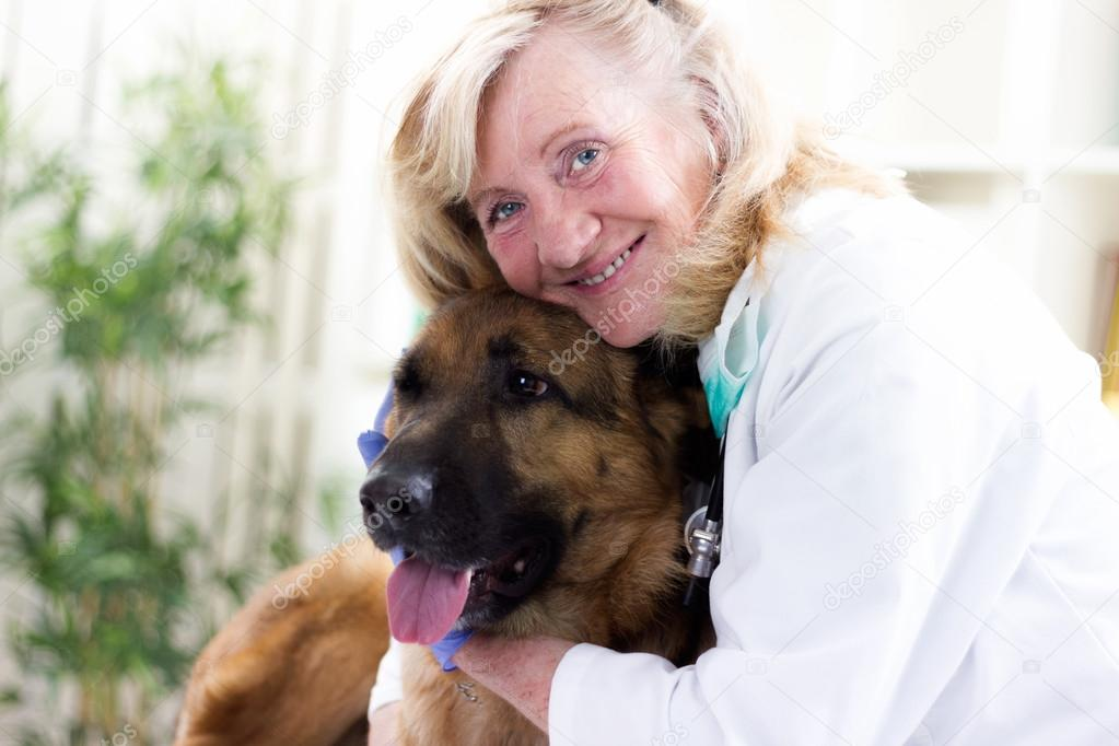 Ufficio In Tedesco : Senior veterinario abbracciando il pastore tedesco in ufficio