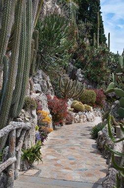 Garden of cacti and succulents in Monaco