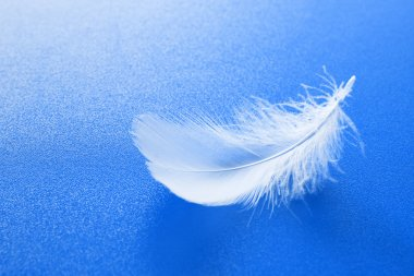 White feather on blue