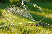 irrigazione di erba verde