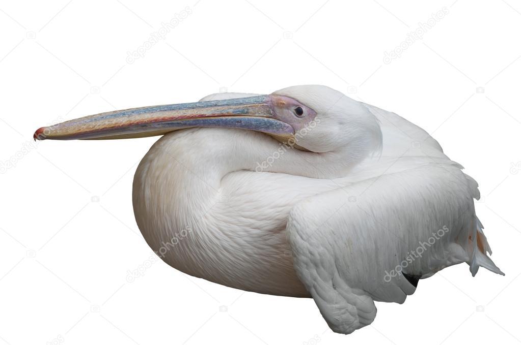 Пеликан летит высоко в небе - философское отношение к жизни, - как к театру, в котором меняются пьесы.