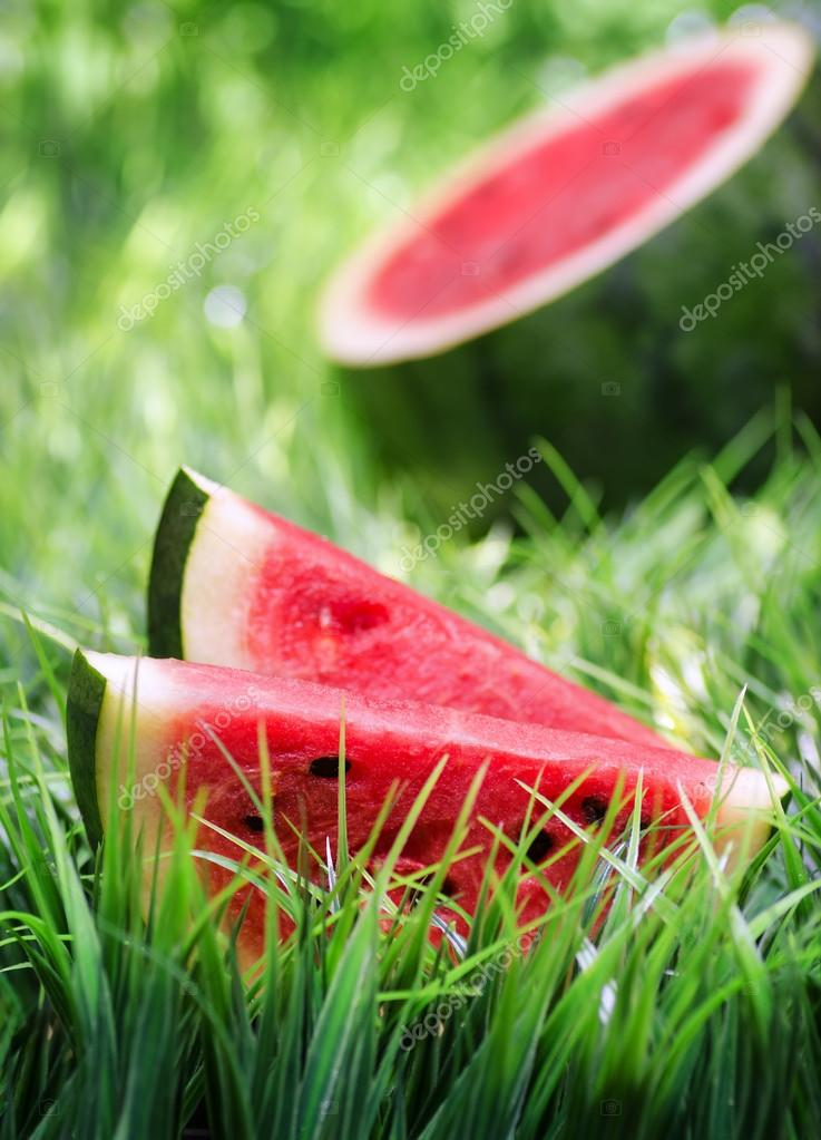 Ripe watermelon on green grass