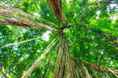 Photo Green trees in tropical rainforest
