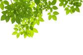 Leaves hintergrund