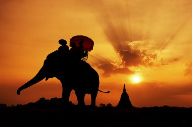 Silhouette of Elephant with Sunset