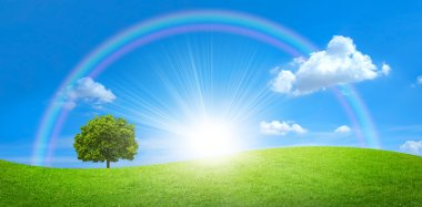 Panorama of green field with a big tree and rainbow in blue sky
