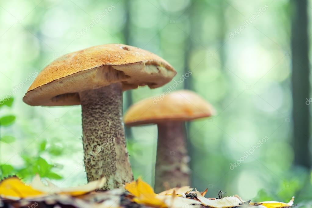 Фотообои Mushroom