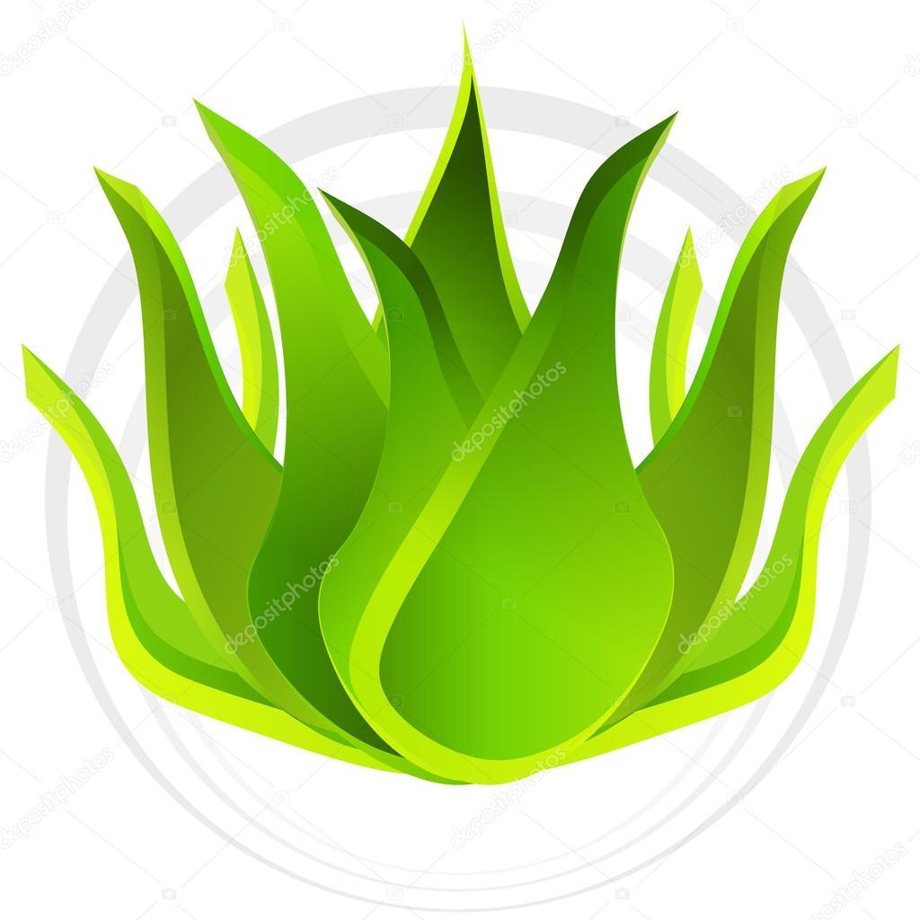 3d Aloe Vera Plant