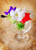 Fotografie barevné květy