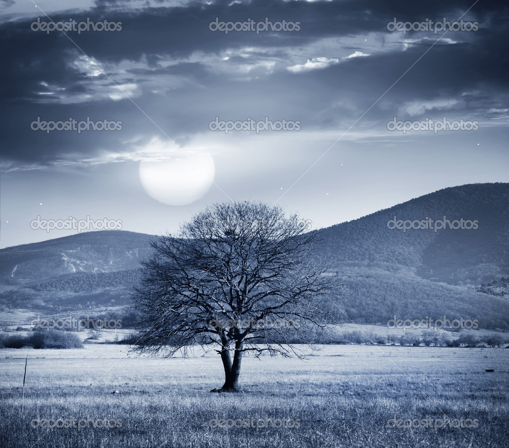 One tree and full moon